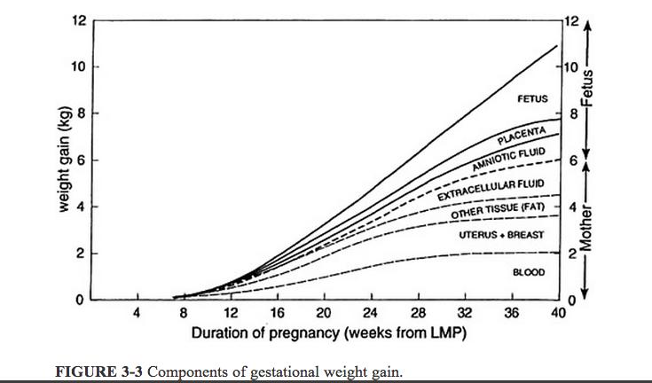 Similiar Pregnancy Weight Gain During Each Week Keywords